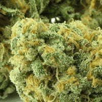 WSS Skunk Feminized Seeds