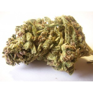 jack herer strain medical marijuana strain